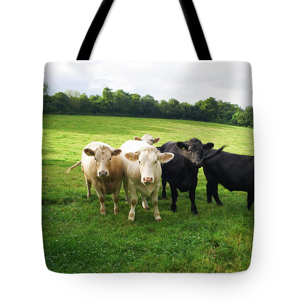 Grass Tote Bag featuring the photograph Cows Walking In Grassy Field by Peter Muller