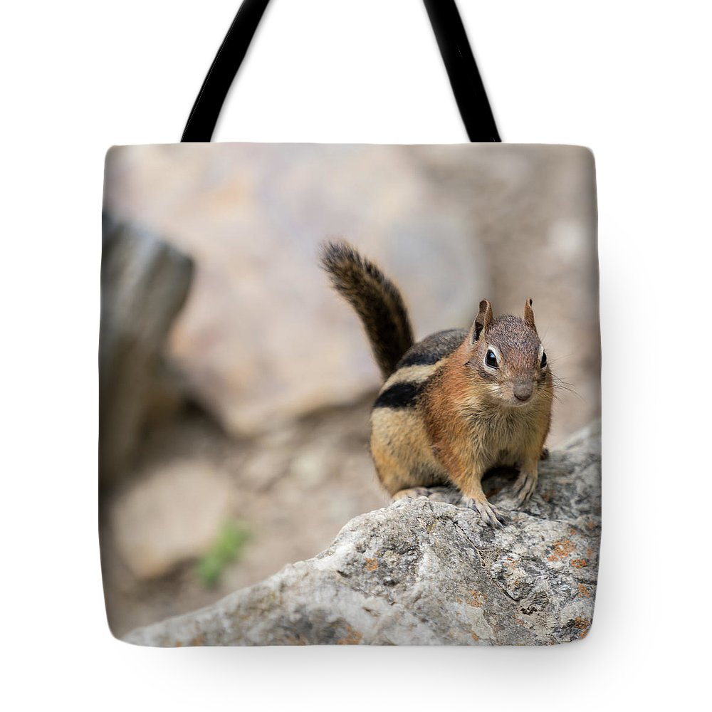 Chipmunk Tote Bag featuring the photograph Curious Chipmunk by Kaitlyn Casso