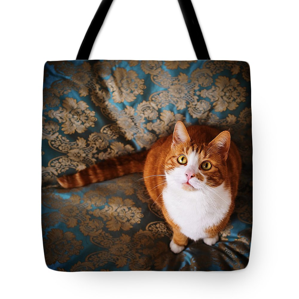 Pets Tote Bag featuring the photograph Cute Cat Named Nisse by Knape