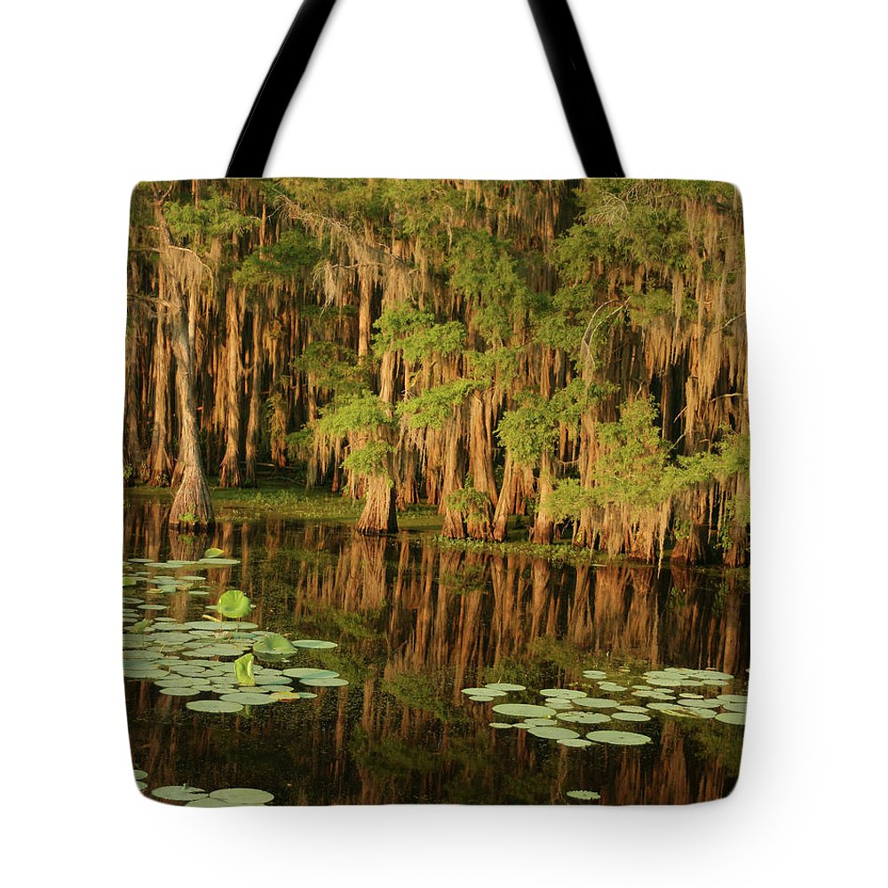 Outdoors Tote Bag featuring the photograph Cypress In The Lake by Jlfcapture
