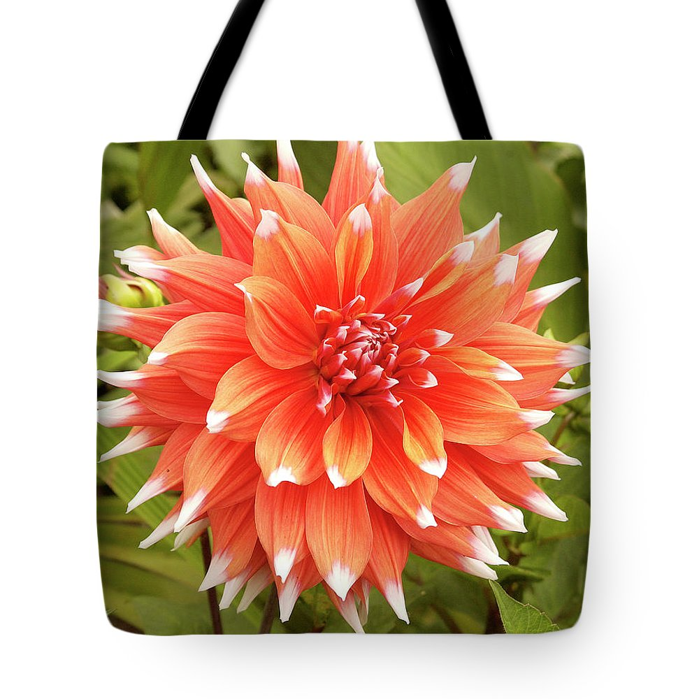 Dahlia Tote Bag featuring the photograph Dahlia Bloom Flower by Victor Lord Denovan