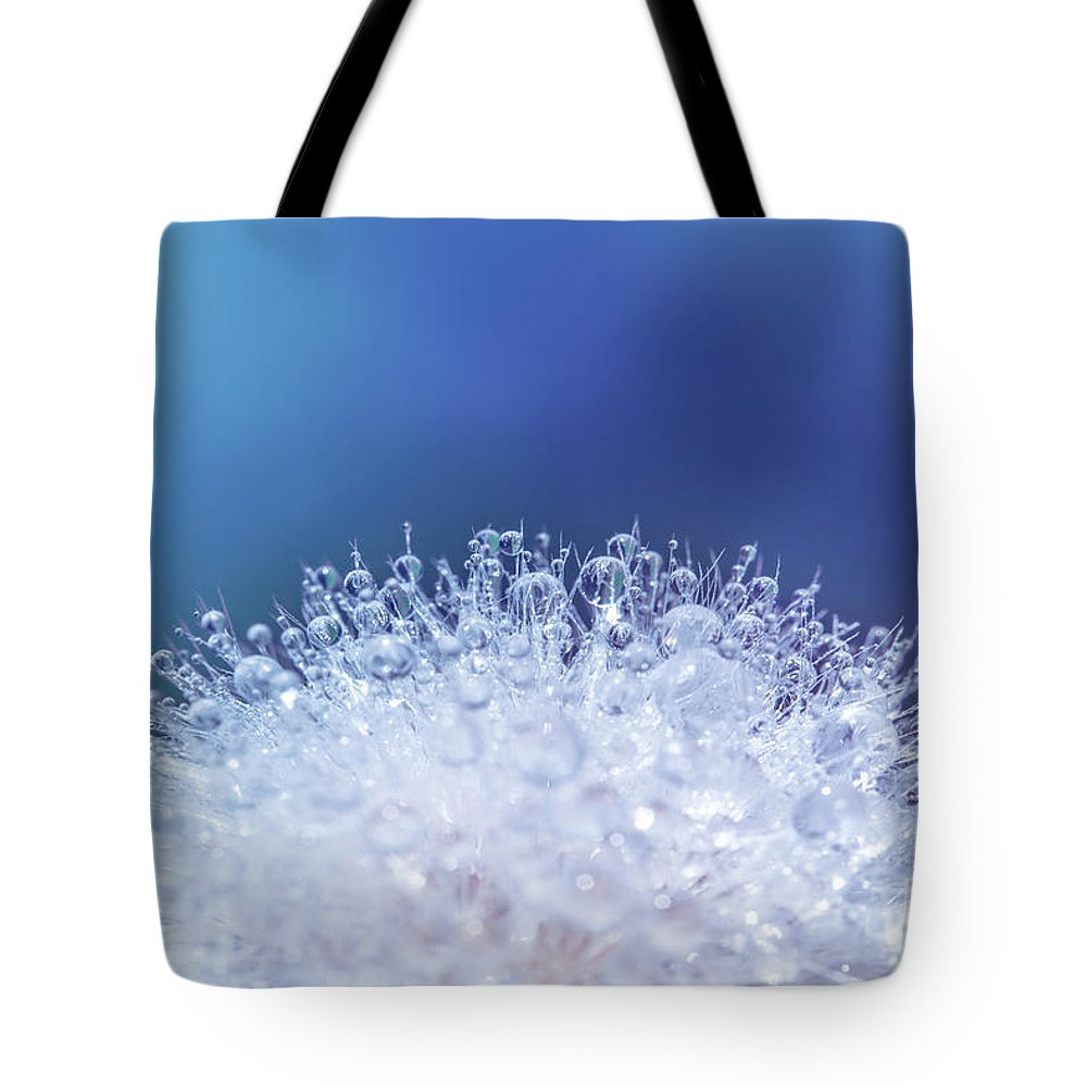 Dandelion Tote Bag featuring the photograph Dew And Dandelion by Delphimages Photo Creations