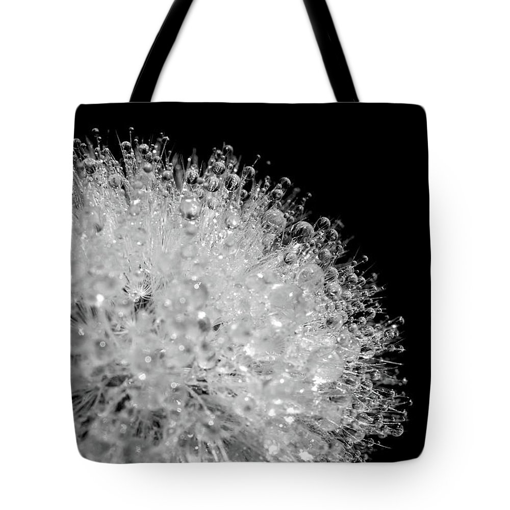 Designs Similar to Dewy Dandelion, Black And White