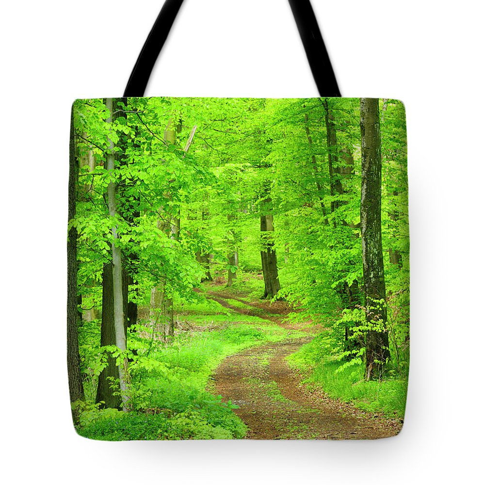 Environmental Conservation Tote Bag featuring the photograph Dirt Road Through Lush Beech Tree by Avtg