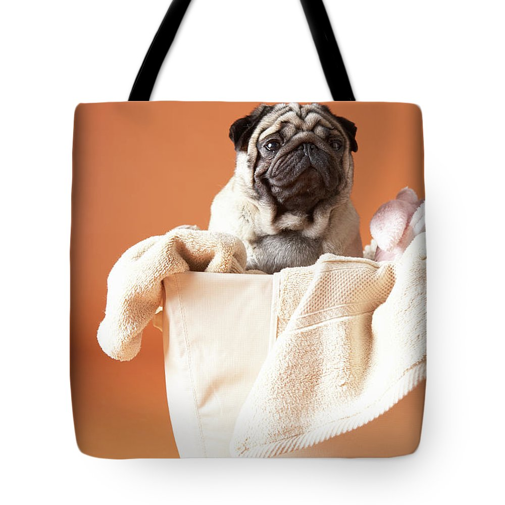 Pets Tote Bag featuring the photograph Dog In Basket by Chris Amaral