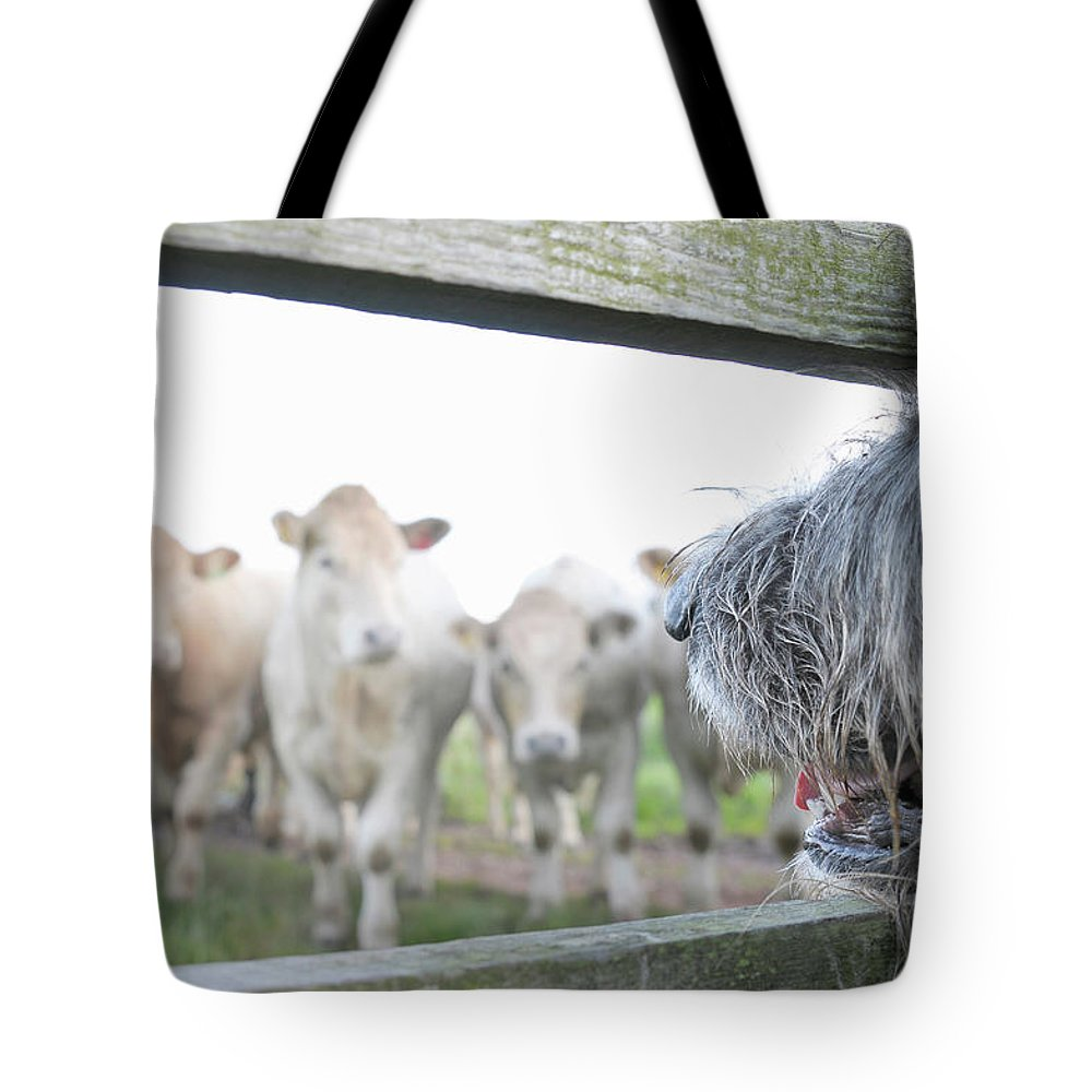 Alertness Tote Bag featuring the photograph Dog Watching Cows Through Fence by Cecilia Cartner
