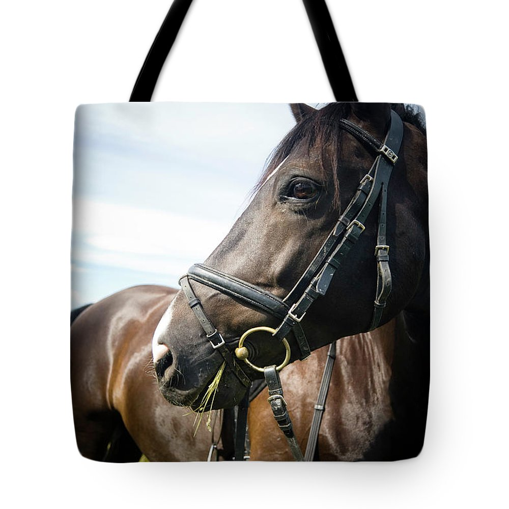 Horse Tote Bag featuring the photograph Dont Look Back by Pixalot
