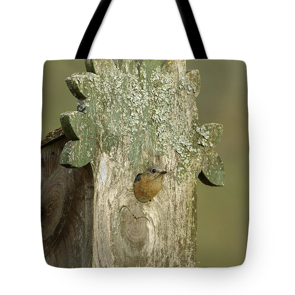 Arkansas Tote Bag featuring the photograph Eastern Bluebird - 0141-2 by Jerry Owens