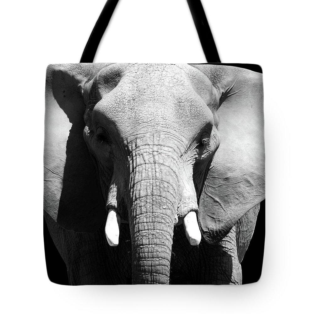 Elephant Tote Bag featuring the photograph Elder Elephant by Alina Avanesian