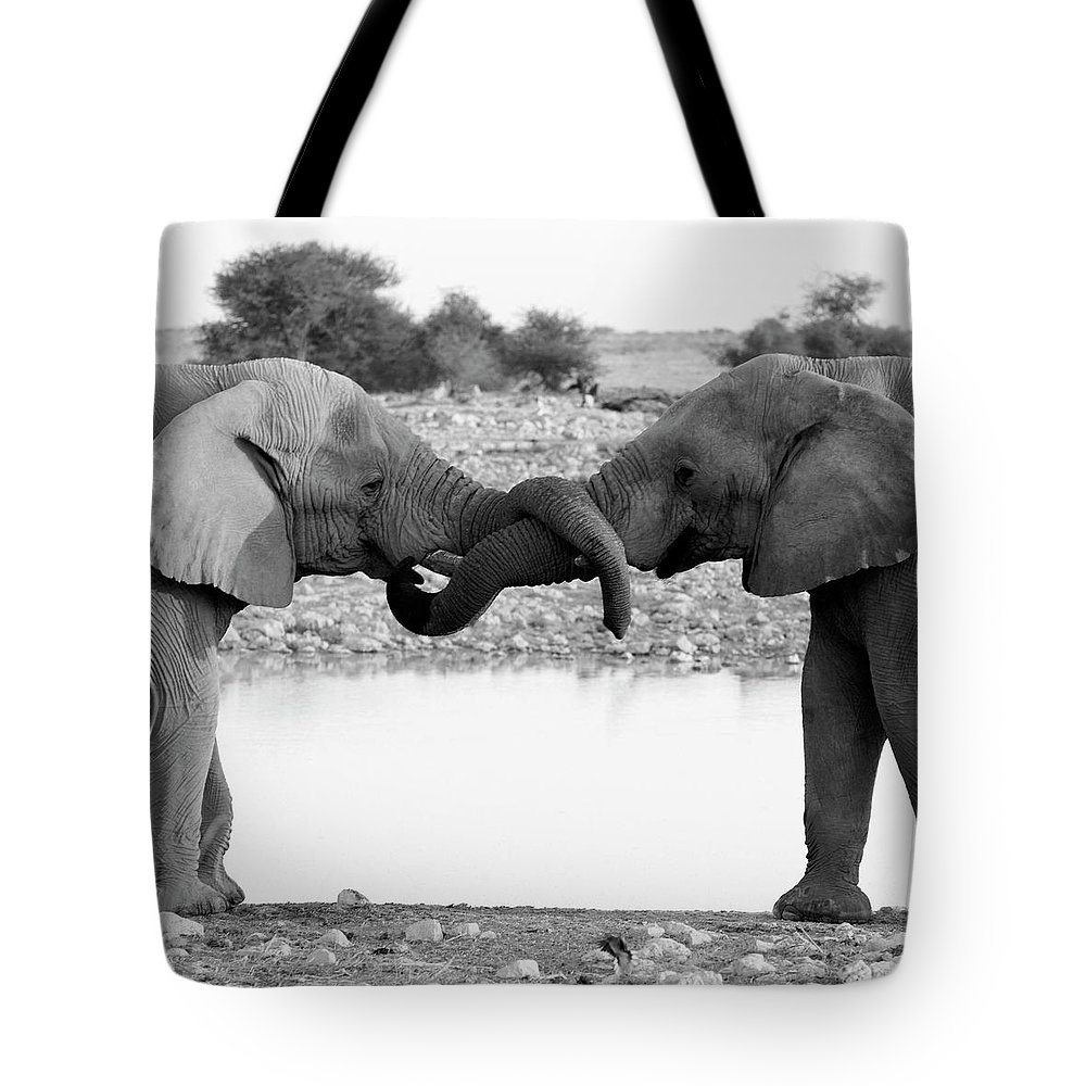 Animal Trunk Tote Bag featuring the photograph Elephants Curling Trunk by Harrykolenbrander