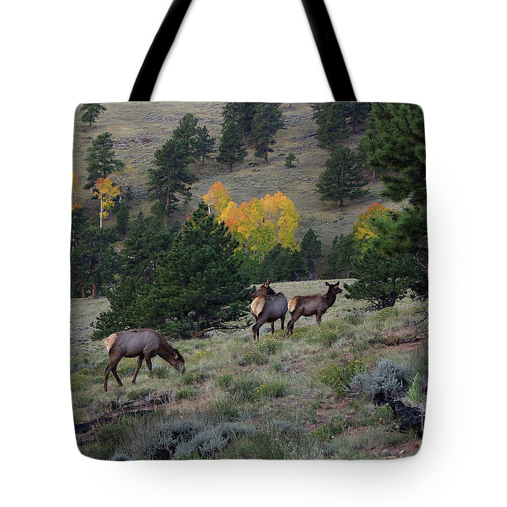 Colorado Tote Bag featuring the photograph Elk - 1964 by Jerry Owens