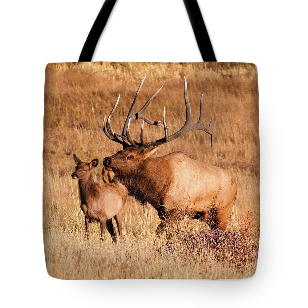 Rocky Mountain National Park Tote Bag featuring the photograph Elk And Mate In Rocky Mountain Meadow by Steve Krull
