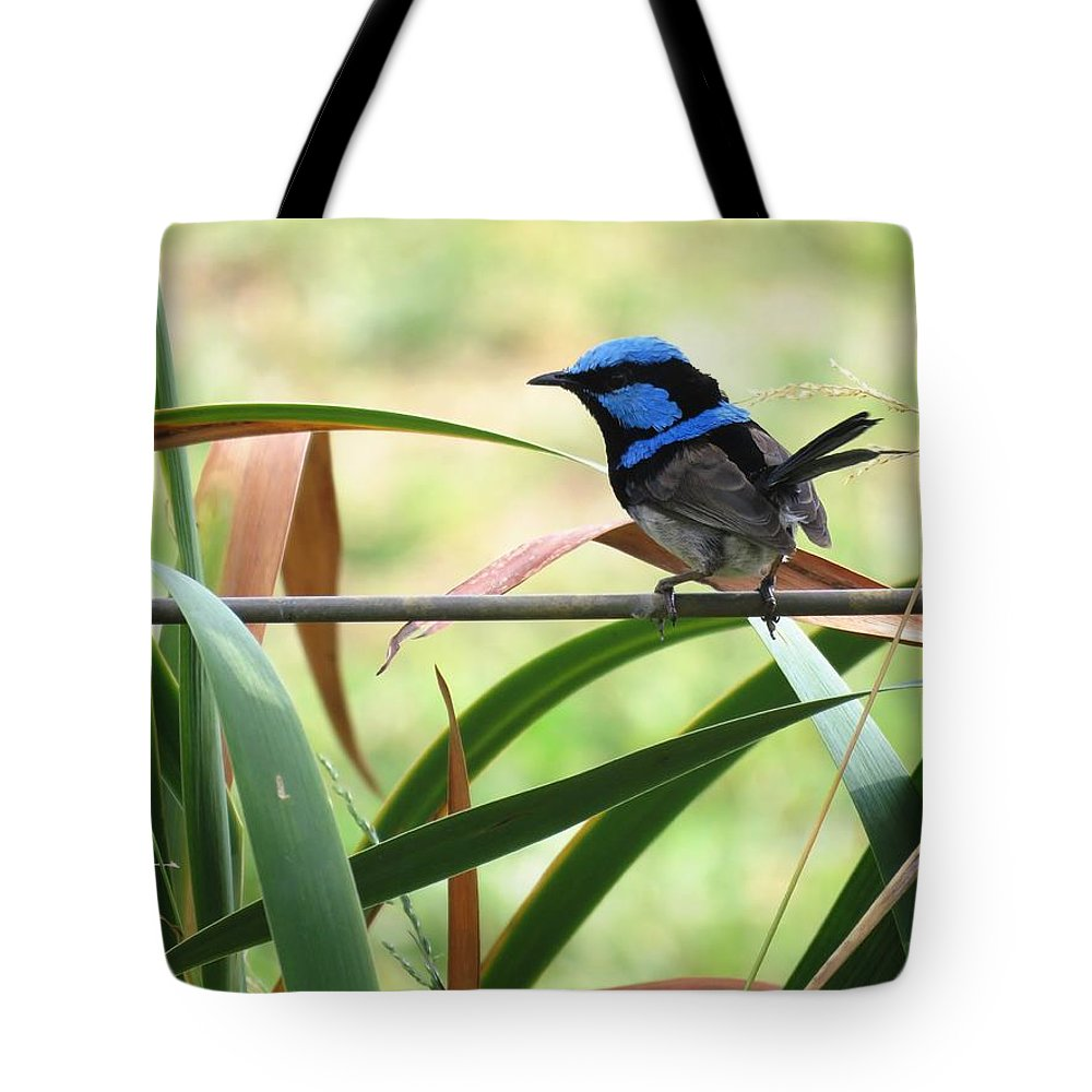 Bird Tote Bag featuring the photograph Fairy-wren 1 by Joan Stratton