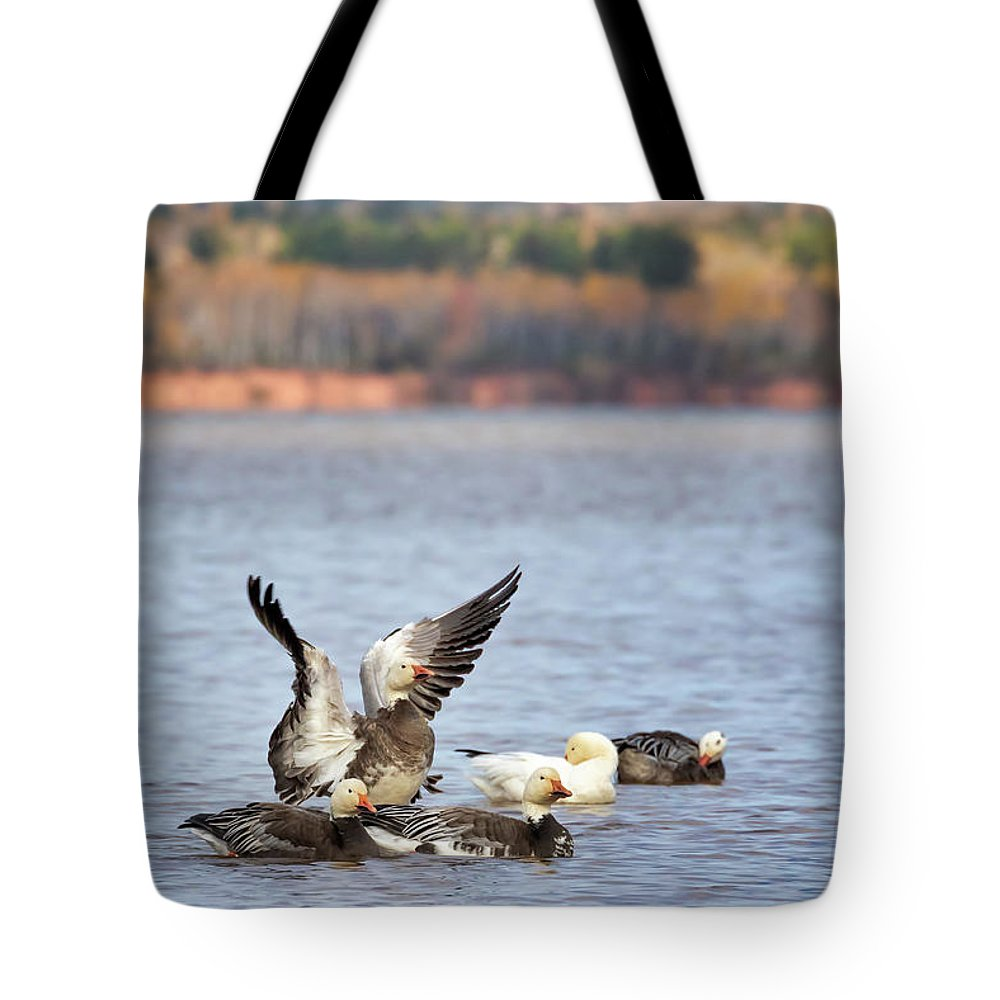 Blue Morph Snow Geese Tote Bag featuring the photograph Fall Migration At Whittlesey Creek by Susan Rissi Tregoning