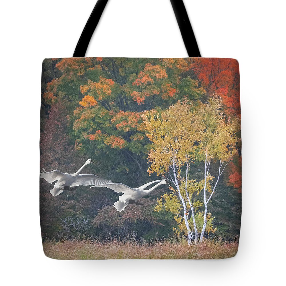 Swans Tote Bag featuring the photograph Fall Swan Landing - Vertical by Patti Deters