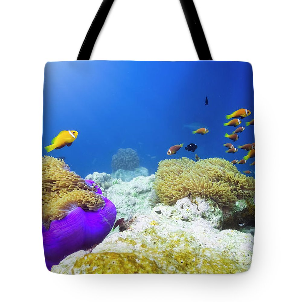 Underwater Tote Bag featuring the photograph Finding Nemo by Cinoby
