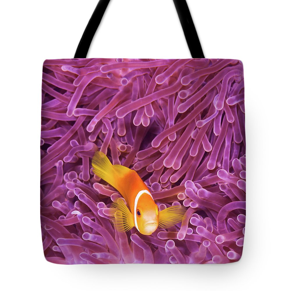 Underwater Tote Bag featuring the photograph Fish by Extreme-photographer