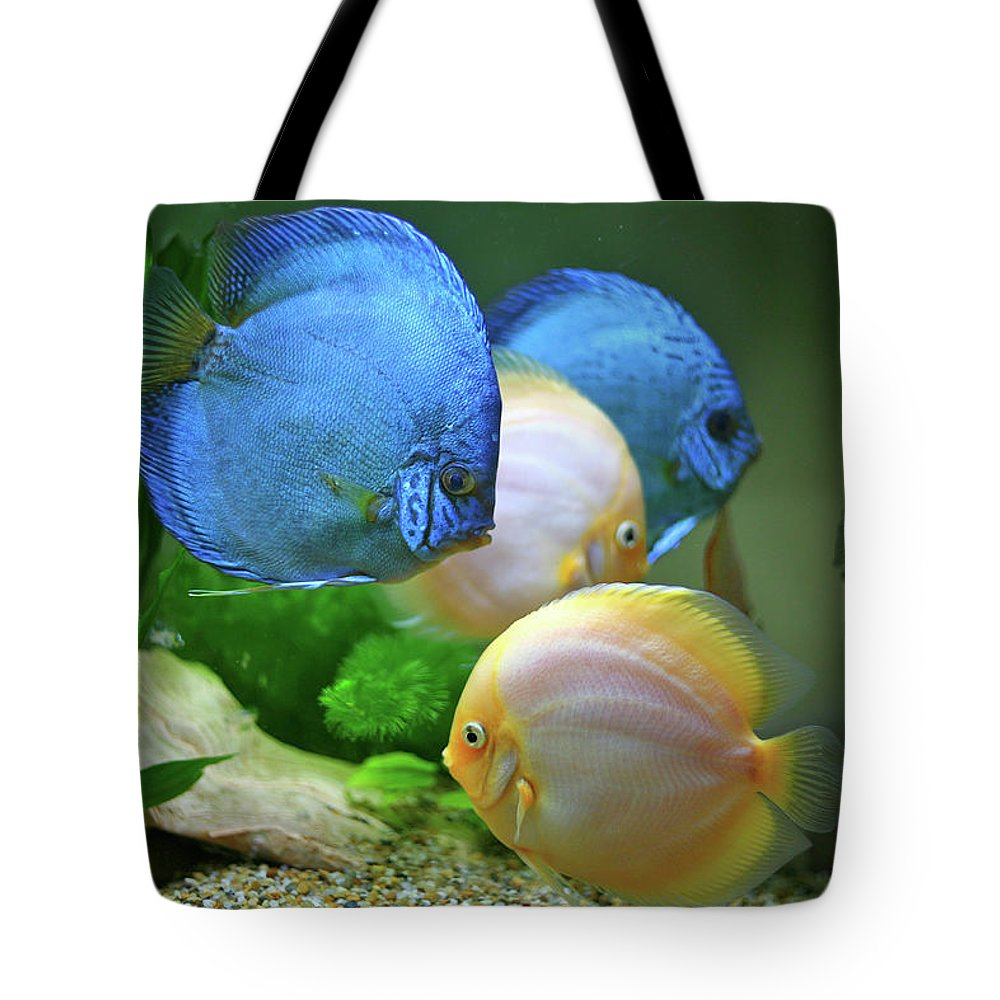 Underwater Tote Bag featuring the photograph Fish In Water by Vietnam