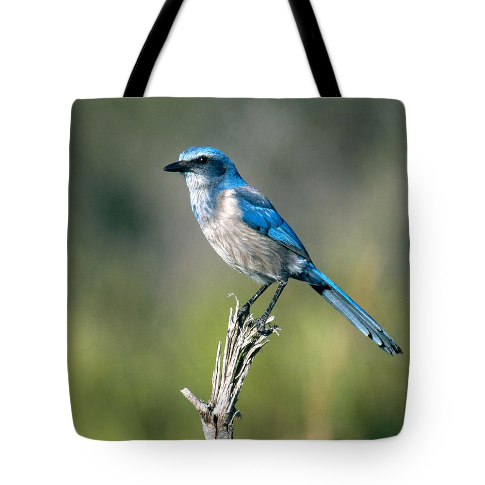 Animal Tote Bag featuring the photograph Florida Scrub Jay by David Hosking