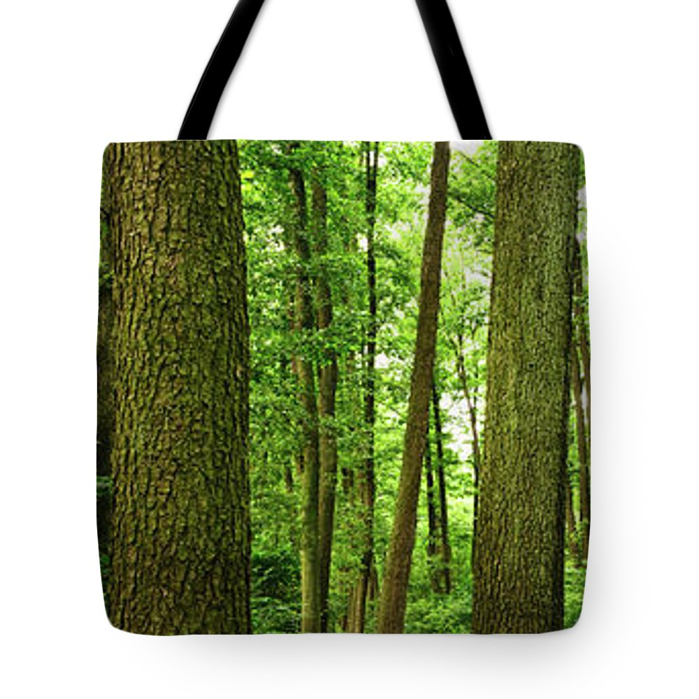 Scenics Tote Bag featuring the photograph Footpath Between The Trees by Tomchat