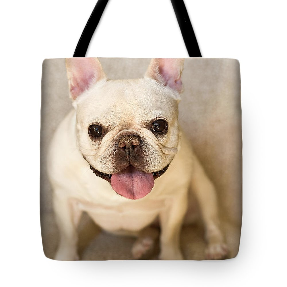 Pets Tote Bag featuring the photograph French Bulldog by Jody Trappe Photography