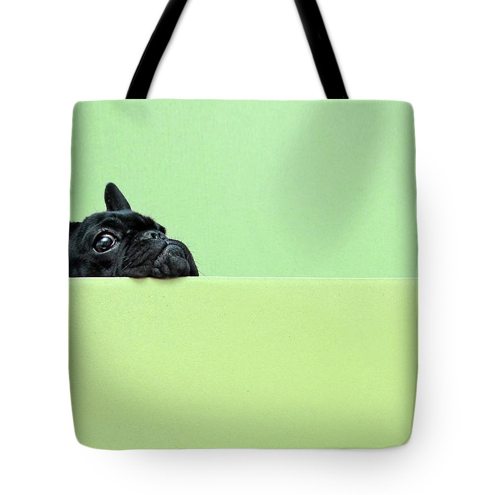 Pets Tote Bag featuring the photograph French Bulldog Puppy by Retales Botijero
