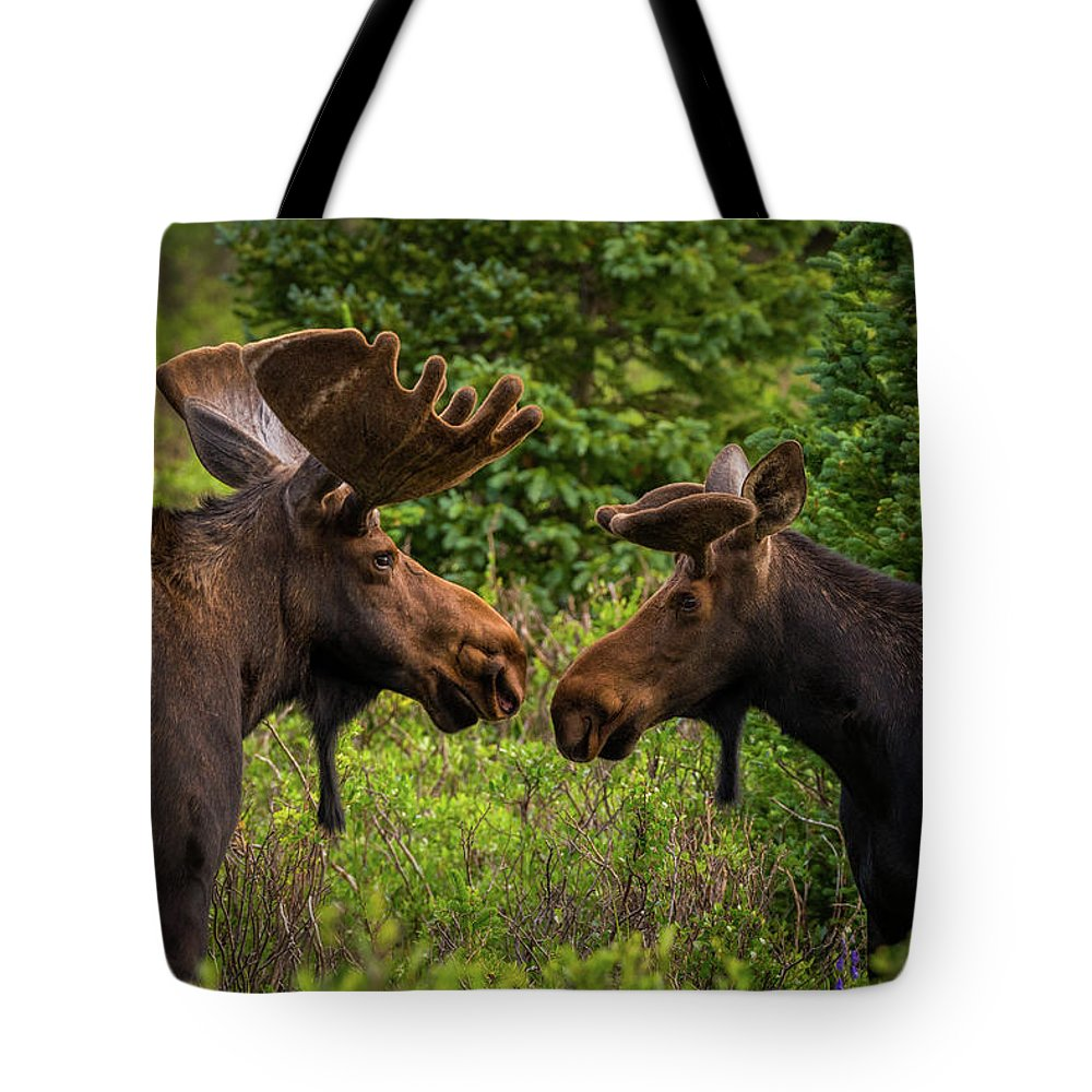Moose Tote Bag featuring the photograph Friendship by Gary Kochel