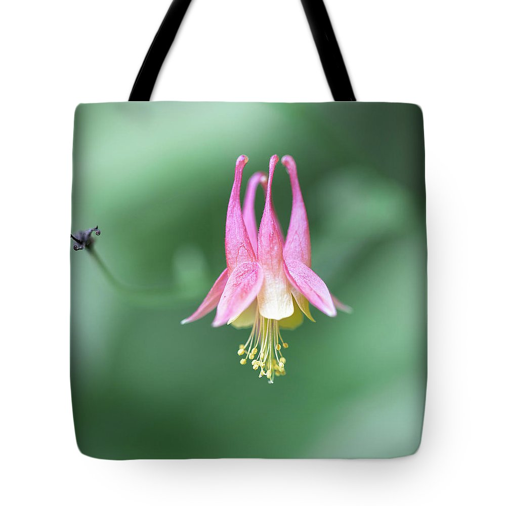 Art Tote Bag featuring the photograph From A Summer Walk In The Woods by Jakub Sisak