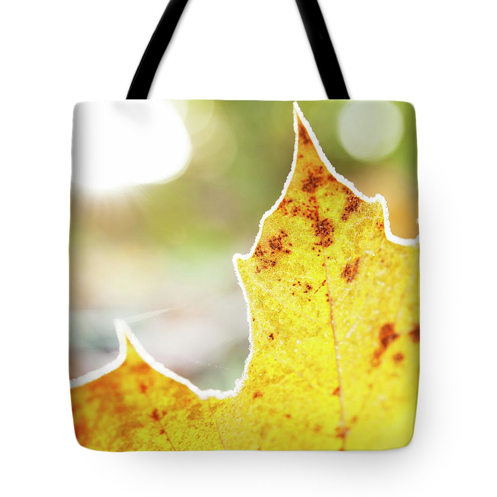 Scenics Tote Bag featuring the photograph Frost On Autumn Leaf, Detail by Johner Images