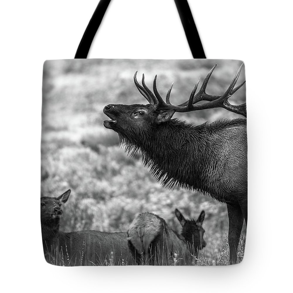 Bull Elk Tote Bag featuring the photograph Frozen Dawn Bugle by Gary Kochel