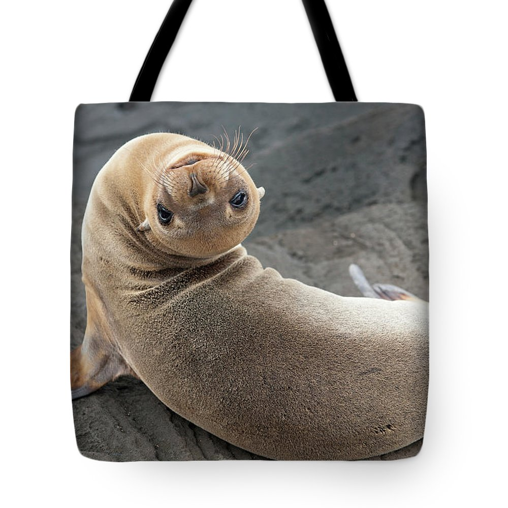 Looking Over Shoulder Tote Bag featuring the photograph Fur Seal Otariidae Looking Back Upside by Keith Levit / Design Pics