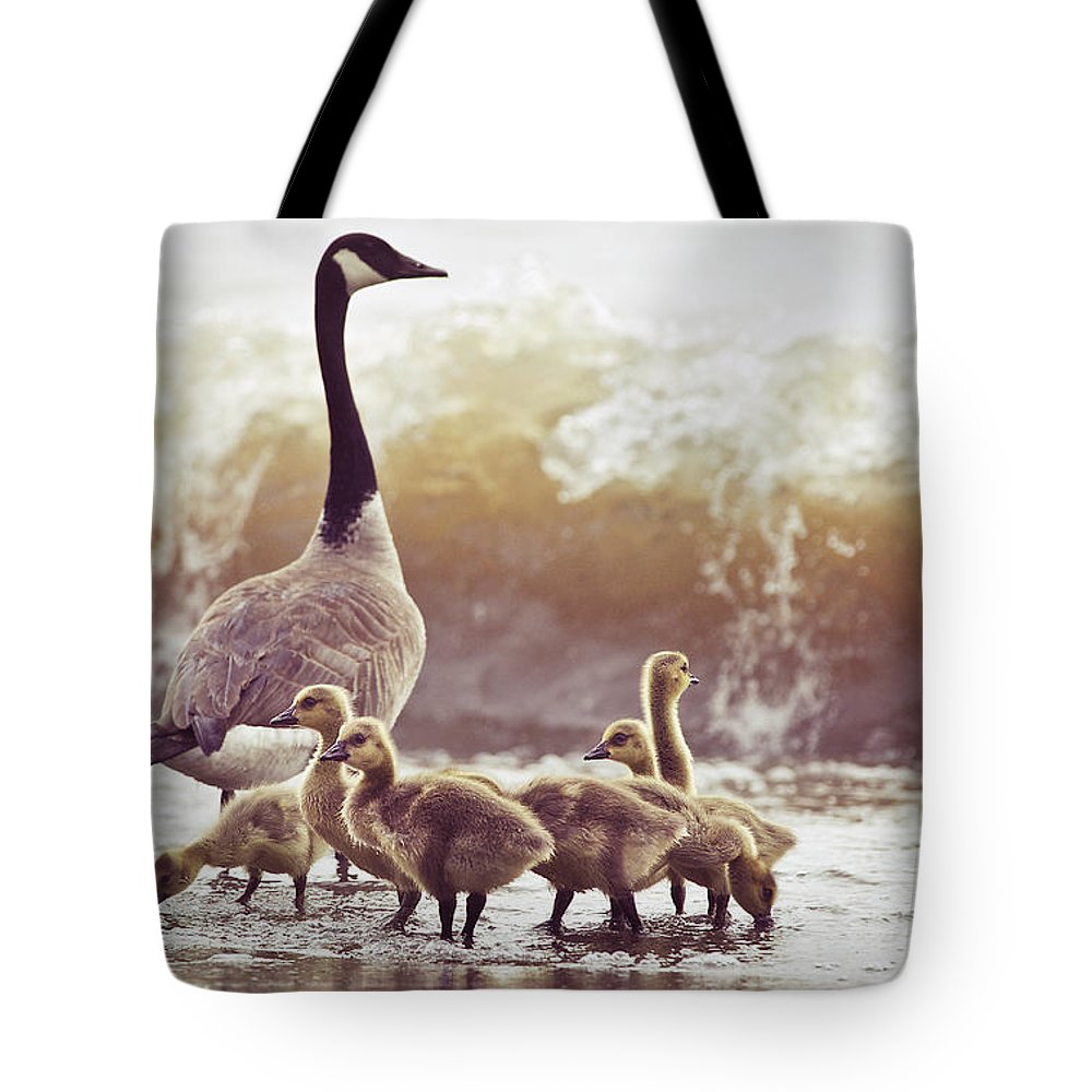 Lake Ontario Tote Bag featuring the photograph Gaggle by Photogodfrey