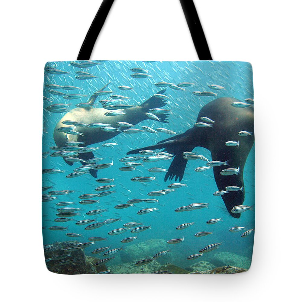 Underwater Tote Bag featuring the photograph Galapagos Sea Lion by Bettina Lichtenberg