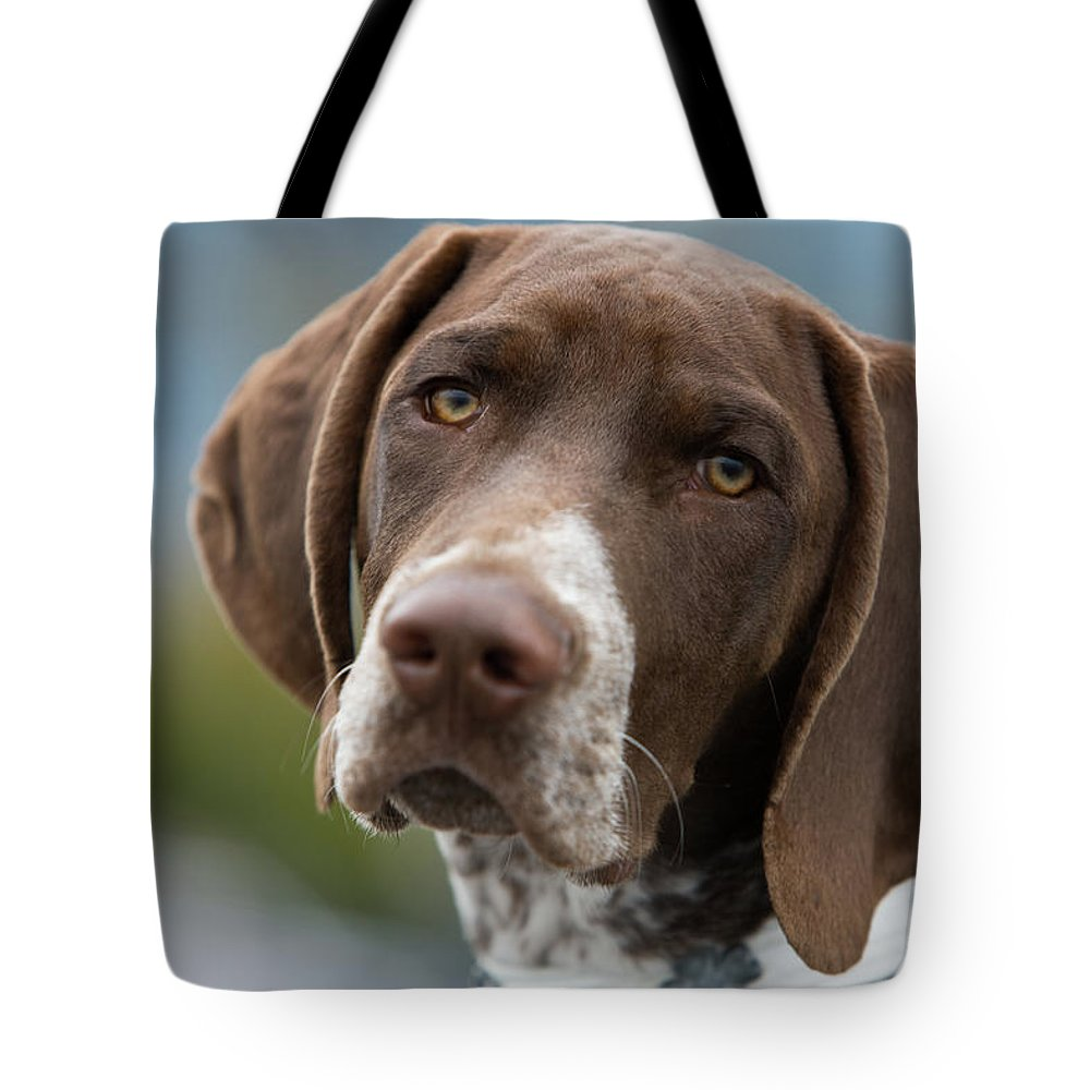 Pets Tote Bag featuring the photograph German Shorthair Pointer With Building by Markhatfield