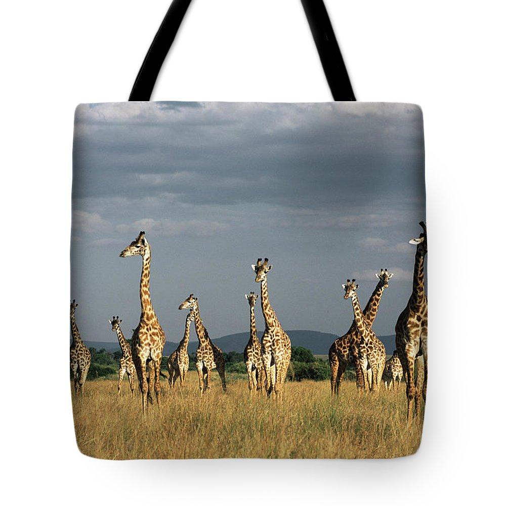 Kenya Tote Bag featuring the photograph Giraffes Giraffa Camelopardalis by James Warwick