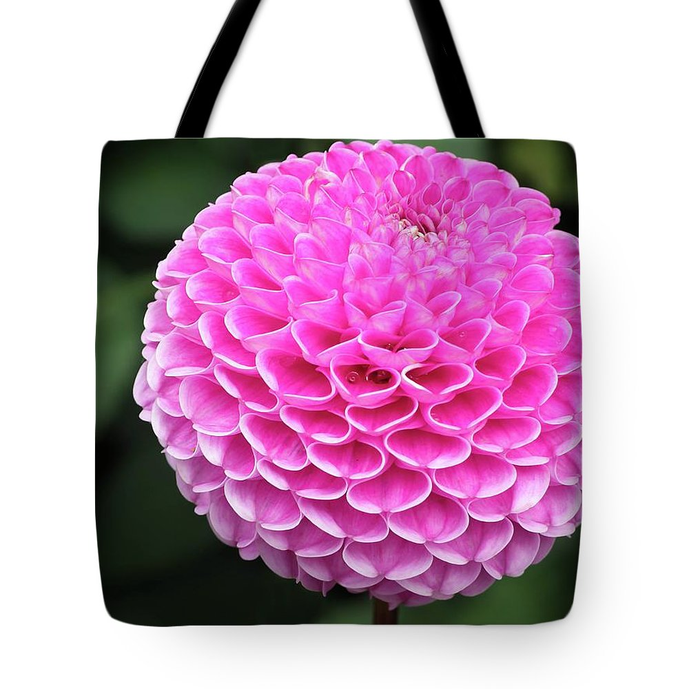 Asteraceae Tote Bag featuring the photograph Globular Pompon Dahlia by James Lamb