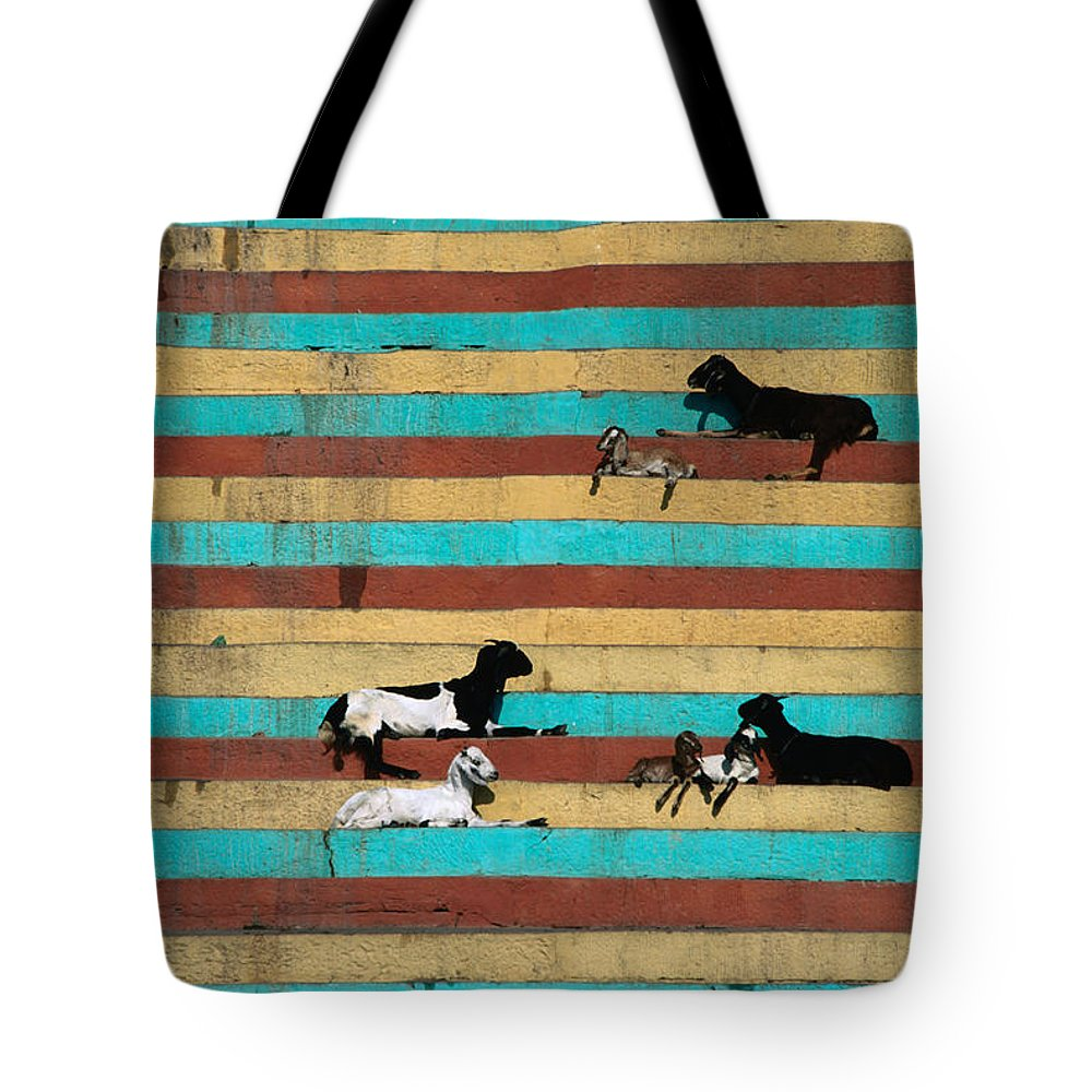 Steps Tote Bag featuring the photograph Goats Resting On The Tulsi Ghats by Anders Blomqvist