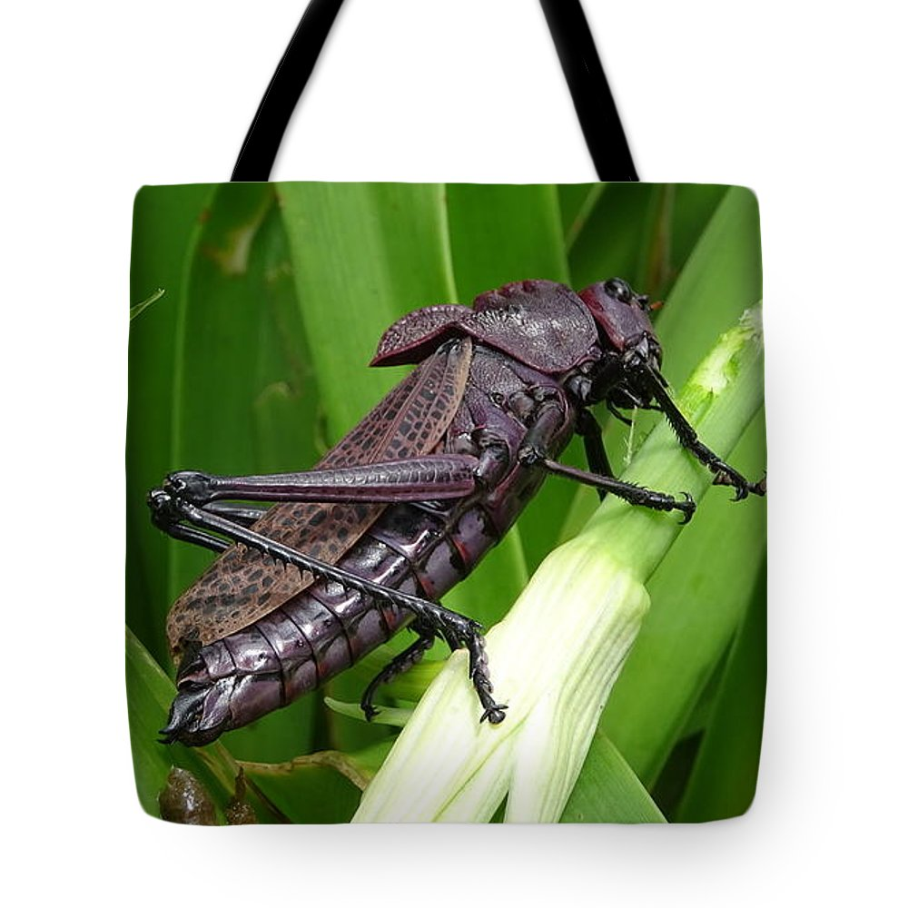 Tote Bag featuring the photograph Grasshopper by Stanley Vreedeveld