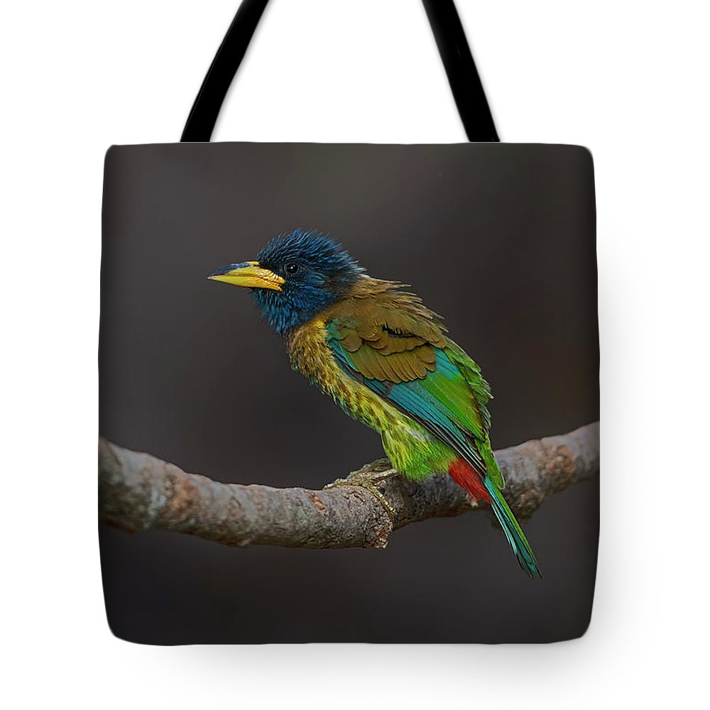 Beautiful Birds Photographs Tote Bags