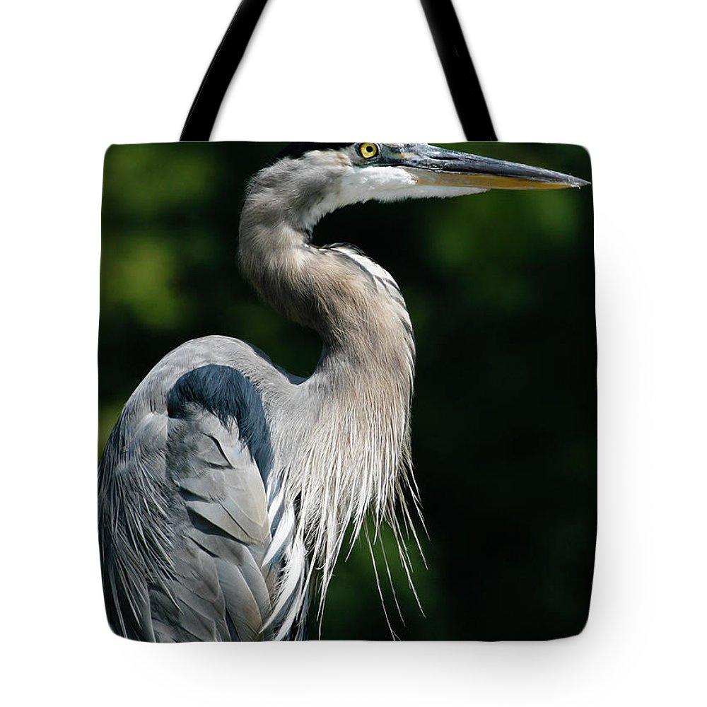 North Carolina Tote Bag featuring the photograph Great Blue Heron by Bill Swindaman
