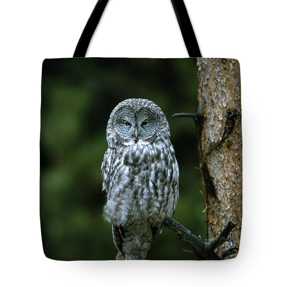Great Gray Owl Tote Bag featuring the photograph Great Gray Owl Strix Nebulosa On Perch by Riccardo Savi