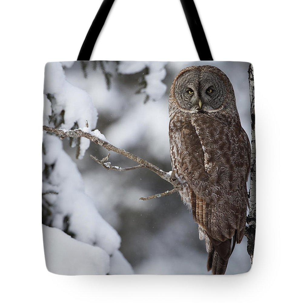 Snow Tote Bag featuring the photograph Great Grey Owl by Corey Hayes
