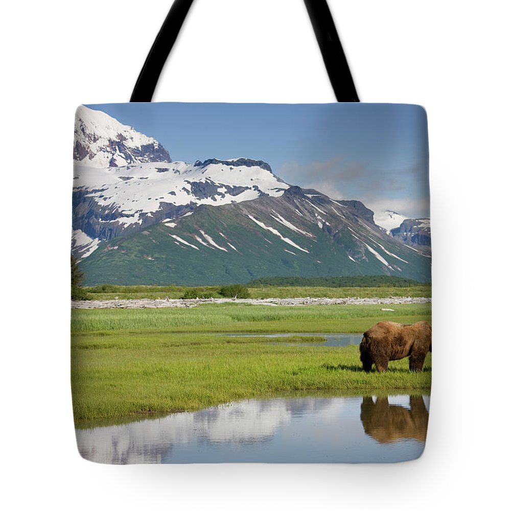 Brown Bear Tote Bag featuring the photograph Grizzly Bear, Katmai National Park by Paul Souders