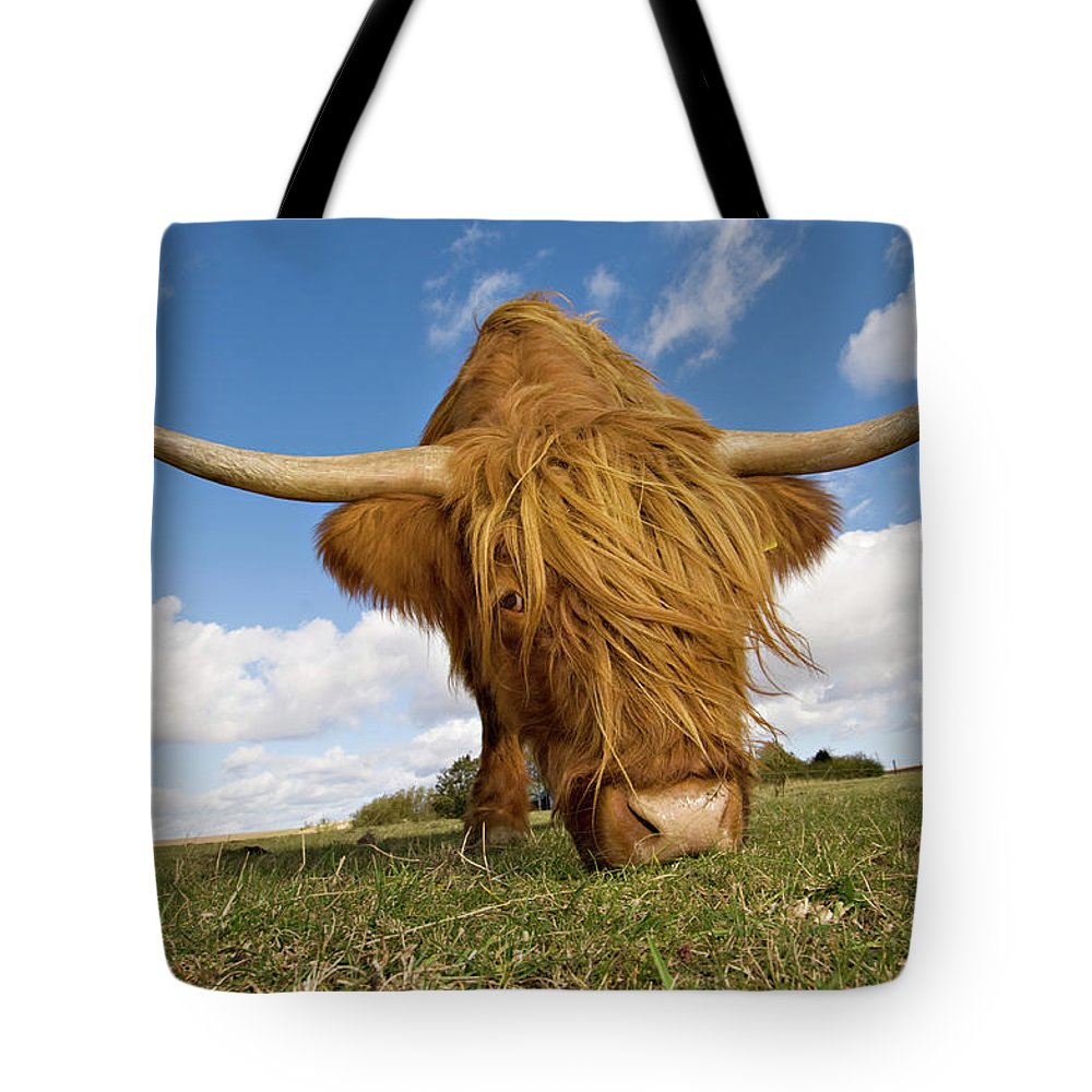 Horned Tote Bag featuring the photograph Hairy, Horned, Highland Cow Grazing by Clarkandcompany