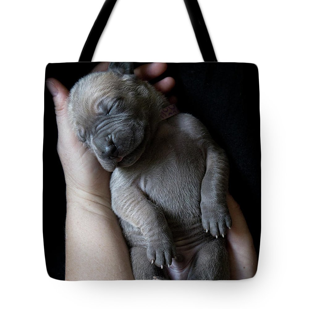 People Tote Bag featuring the photograph Hands Holding A Sleeping Puppy by Ben Robson