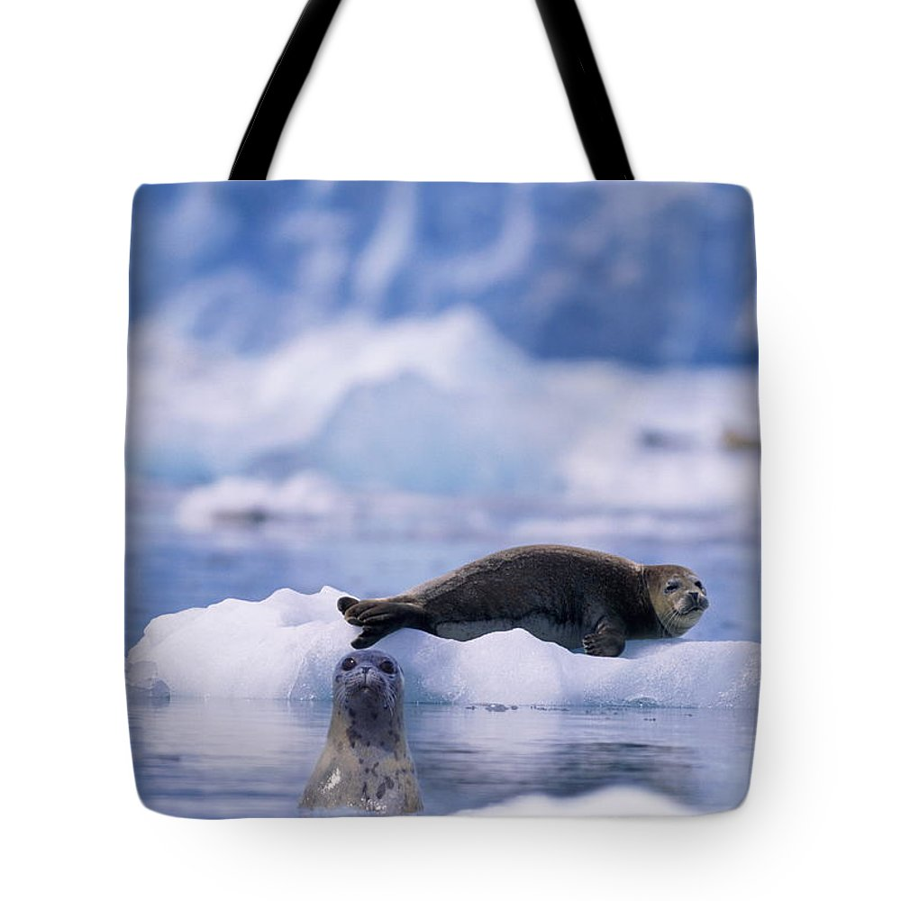 Animal Themes Tote Bag featuring the photograph Harbor Seal Phoca Vitulina In Glacial by Paul Souders