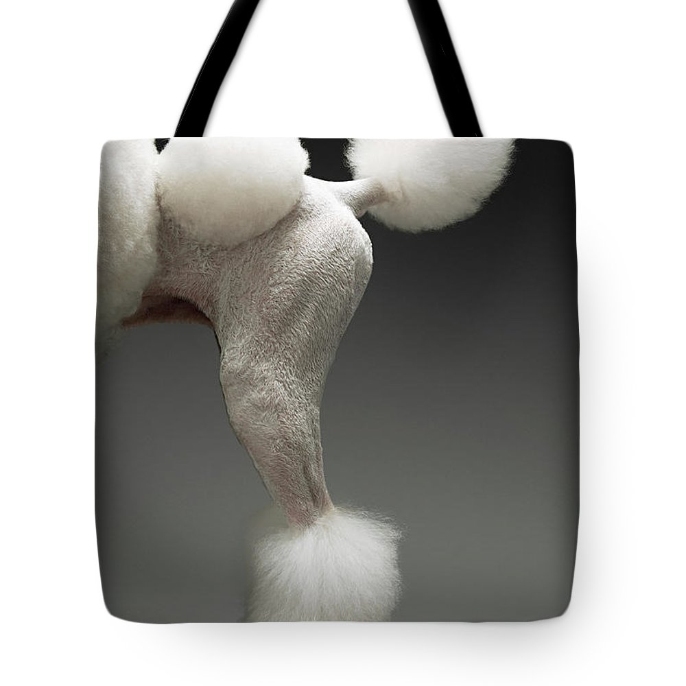 Pets Tote Bag featuring the photograph Haunches Of Poodle, On Grey Background by Moodboard