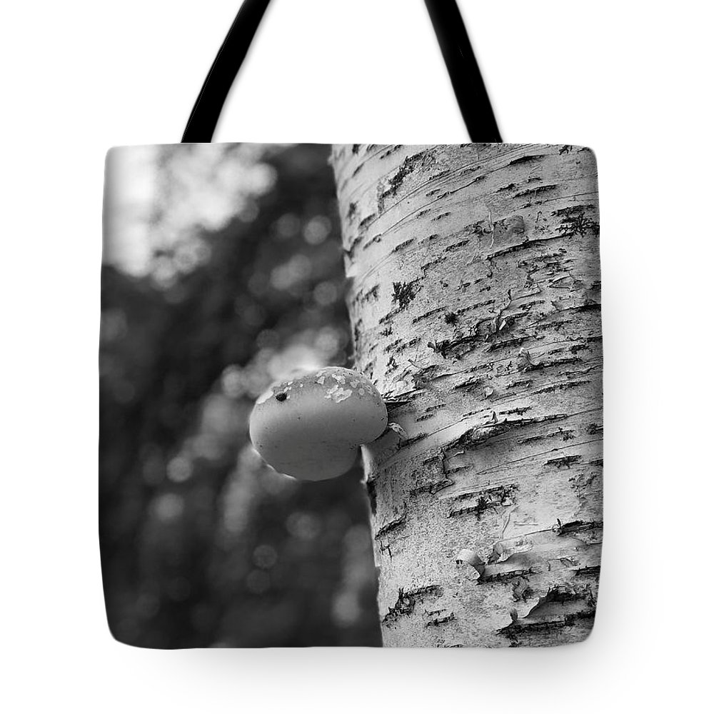 Birch Tree Tote Bag featuring the photograph Heart On A Tree by Tom Johnson