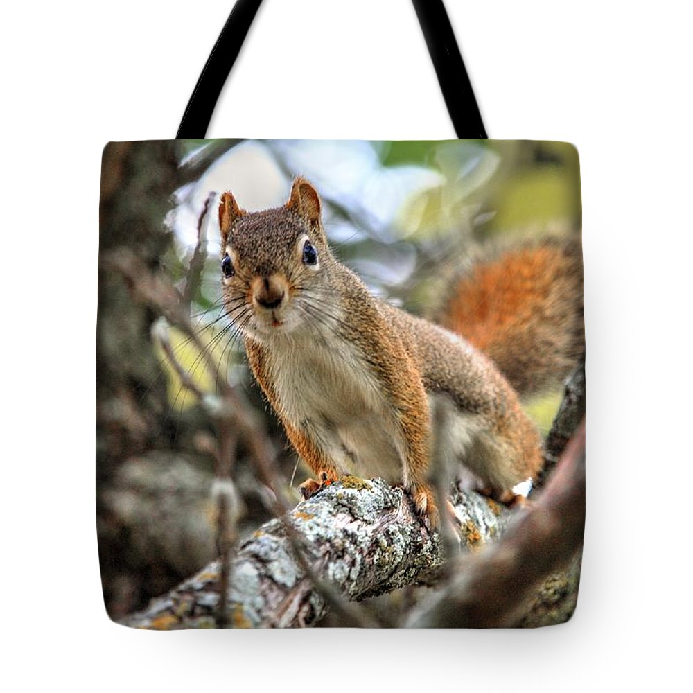 Autumn Fall Colours Colors Winter Red Yellow Red Orange Blue Harvest Evening The End Over This Before Winter Awakening Fall Colours Fall Color Summers End Pumpkins Halloween Leaves Gourds Fall Avenue Tote Bag featuring the photograph Hello by David Matthews