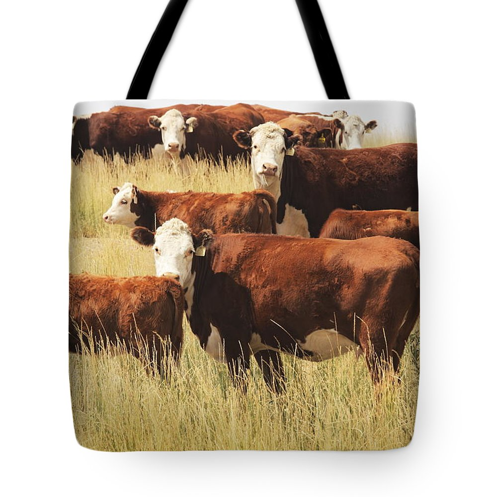 Non-moving Activity Tote Bag featuring the photograph Hereford Cow Farm Pasture Livestock by Chuckschugphotography